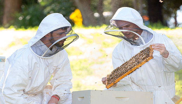 Research supervisor Andrew Barron (right) specialises in insect behavioural systems.