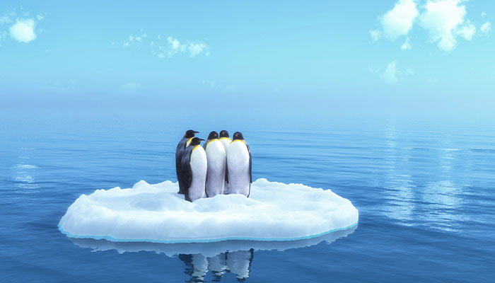 Marine park for Antarctica relies on EU engaging China: law expert
