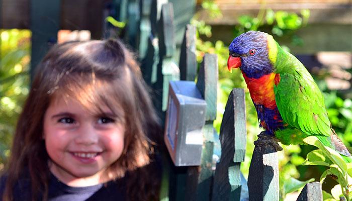 Backyard bird count shines a light on urban bird life