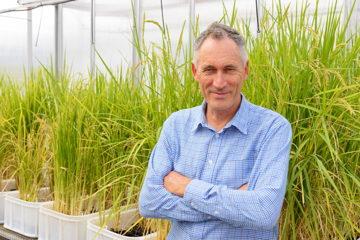 Professor Brian Atwell in the Macquarie University hot houses where he grows heat tolerant rice.