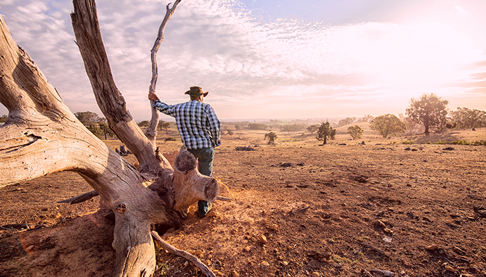 Senior farmer looking over the drought stricken land, during summer and fire season.